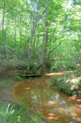 Creek-resized.JPG