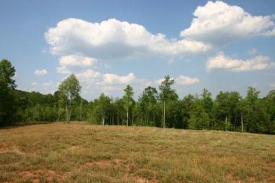 Late summer meadow.JPG