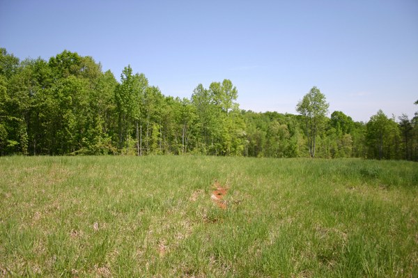 Left upper pasture.jpg