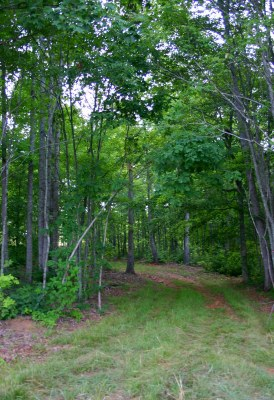 Log rd meadow- resized.JPG