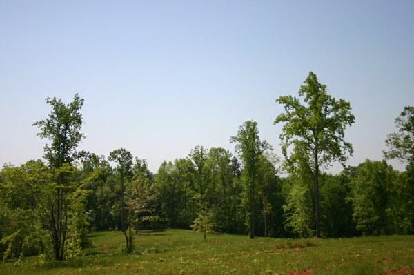 Lower R Pasture.jpg