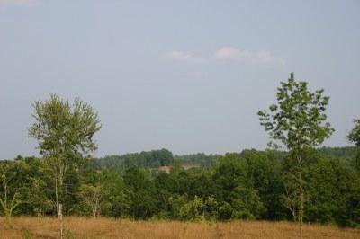 View of vineyards growing on distant hillside.JPG