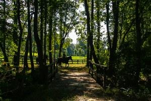 Derbyshire  Horses on Trail Bridge