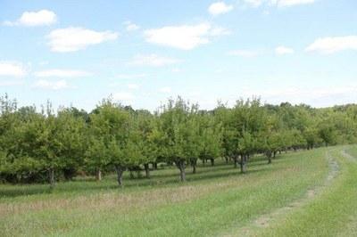 orchard #1.jpg