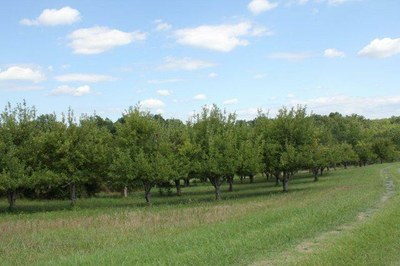 orchard greener.jpg