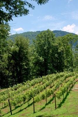 Vineyard - Mtn View.jpg