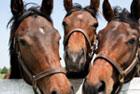 horsebutton.jpg
